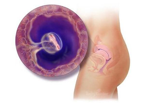 Sự phát triển của thai nhi tuần 2