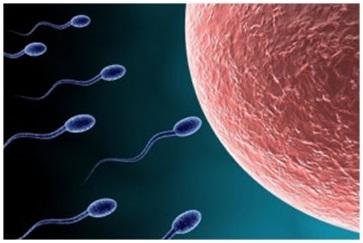 Quá trình thụ thai diễn ra như thế nào