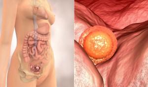 Sự phát triển của thai nhi tuần đầu